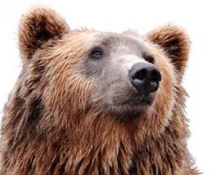 Artio Bear